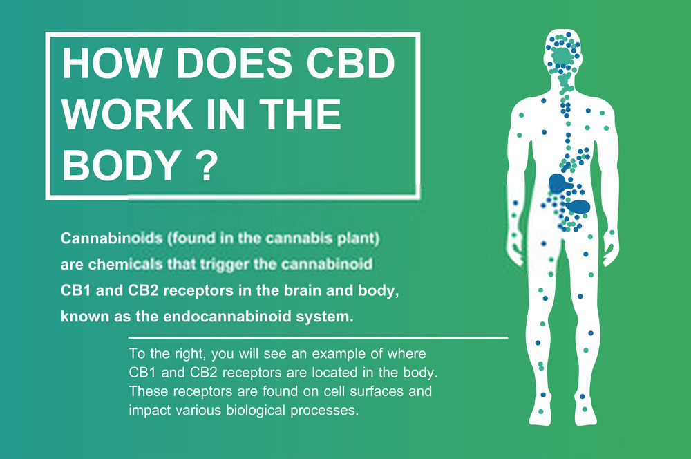 By What means can CBD Gummies help me?